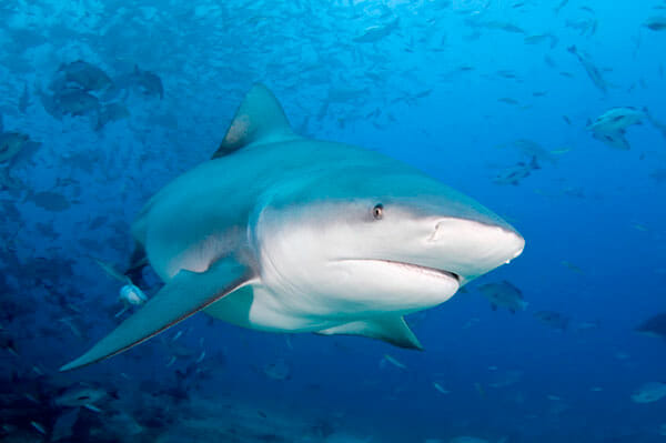tiburon-toro-2019-4