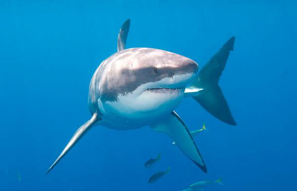 tiburones tiburones.top 2019-