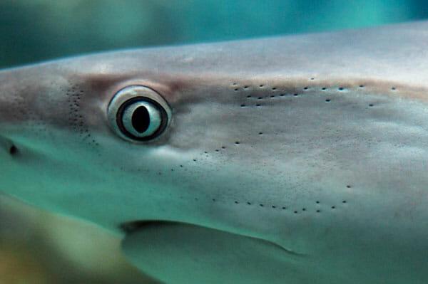 tiburones-tiburones.top-2019-6