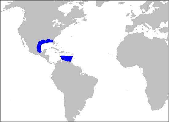 habitat del El Tiburon Bravo del Caribe