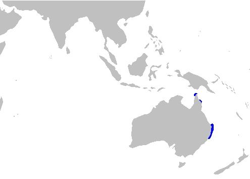 habitat del tiburon alfombra azul