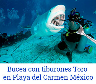bucea-con-tiburones-toro-en-playa-del-carmen-mexico-3