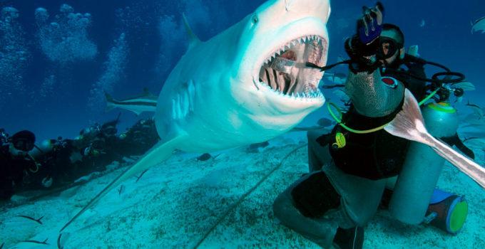 reservar-hotel-buceo-tiburon-toro-playa-del-carmen5