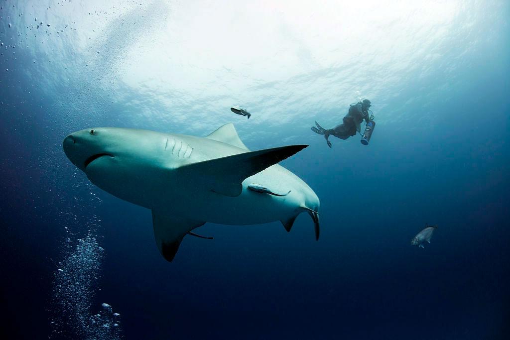 reservar-hotel-buceo-tiburon-toro-playa-del-carmen6