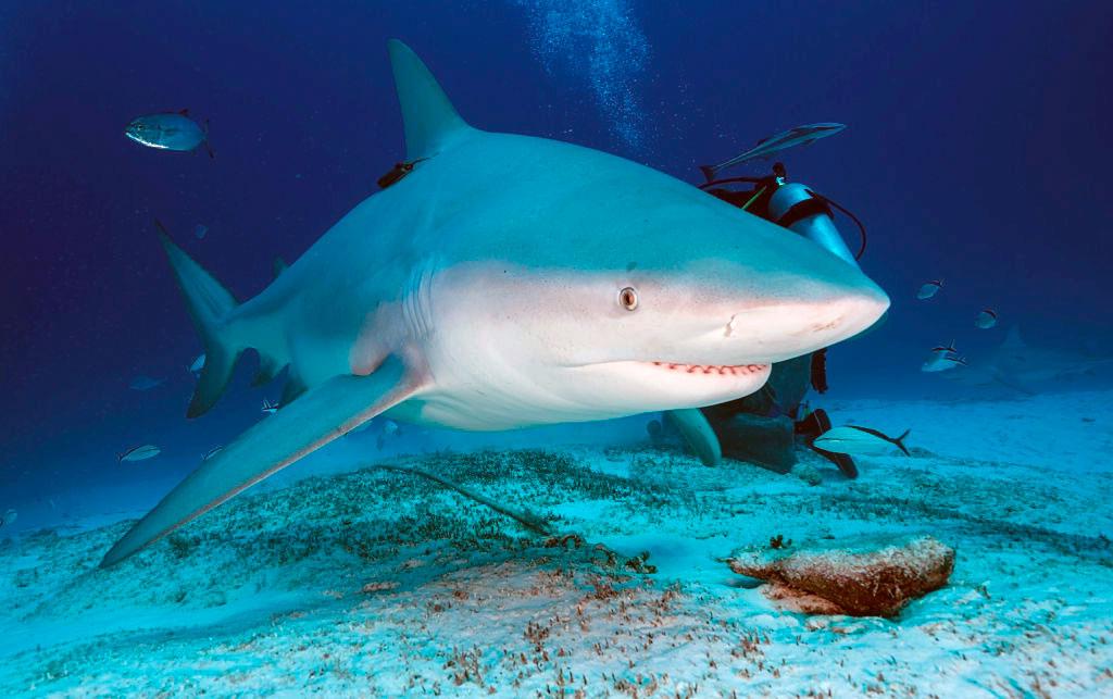 reservar-hotel-buceo-tiburon-toro-playa-del-carmen7