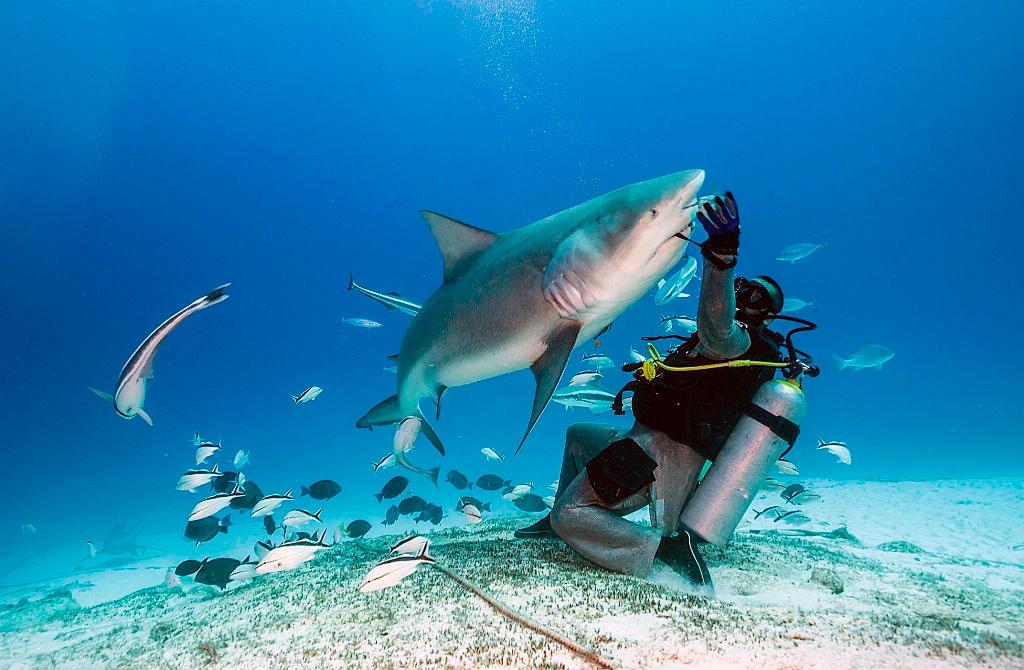 reservar-hotel-buceo-tiburon-toro-playa-del-carmen8