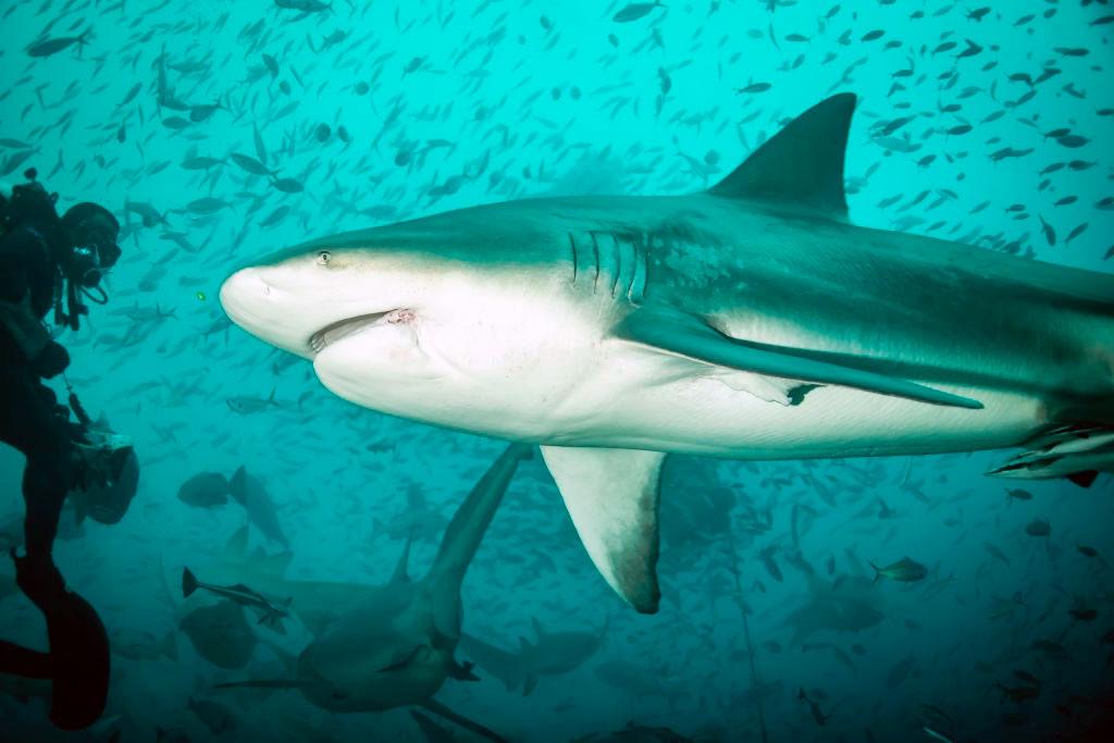 reservar-hotel-buceo-tiburon-toro-playa-del-carmen9