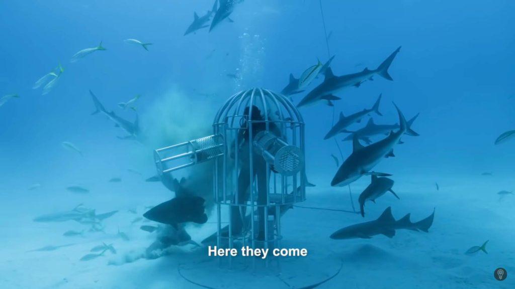 Los tiburones ya se han vuelto locos con el olor a sangre