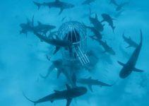 Ataque de Tiburón: ¿Los tiburones prefieren la sangre humana o la de los peces?