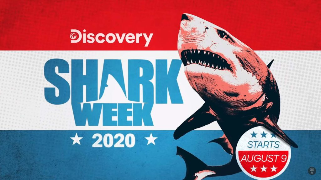 Ataque de Tiburón-Los tiburones prefieren la sangre humana o la de los peces-3