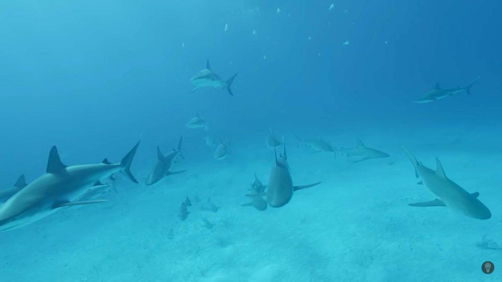 Aún quedaban tiburones merodeando la zona
