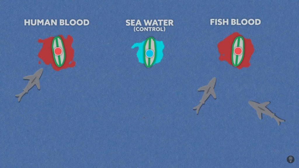 diagrama de las tablas de surf