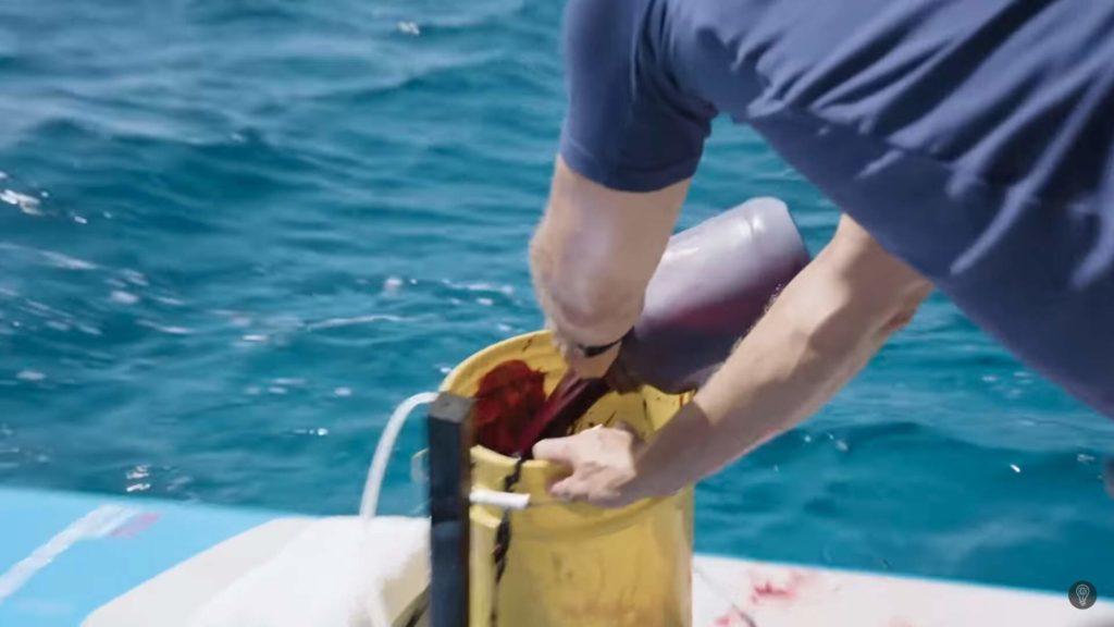 sangre de peces cebo para tiburones