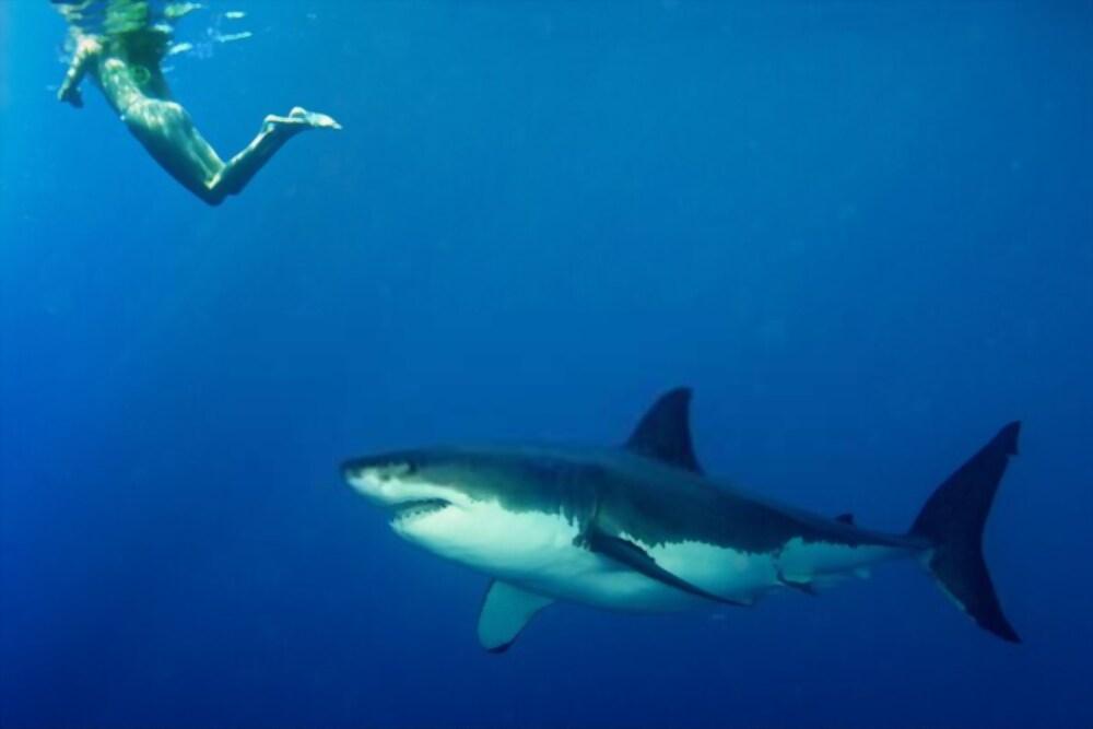 Ataques de Tiburones en 2020: Todos los casos