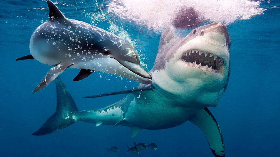 Tiburones y Delfines… ¿Quién ganará?