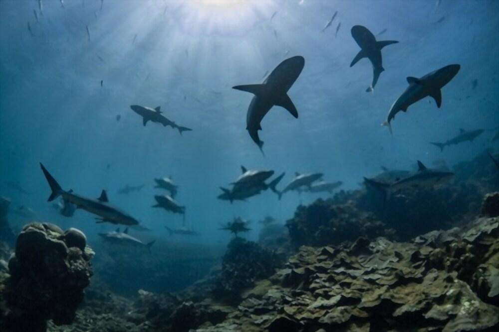 delfines y tiburones-3