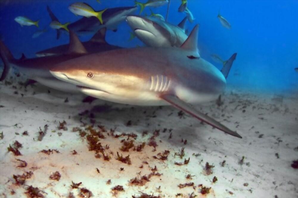delfines y tiburones-4