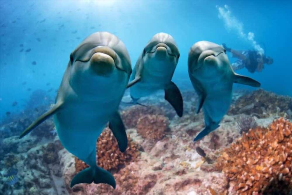 delfines y tiburones-5