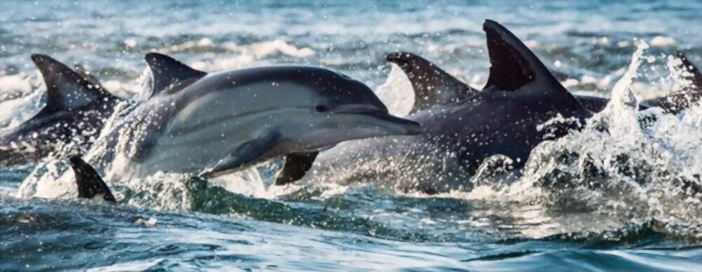 delfines y tiburones-6