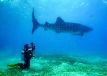 las 9 mejores camaras para filmar tiburones-featured