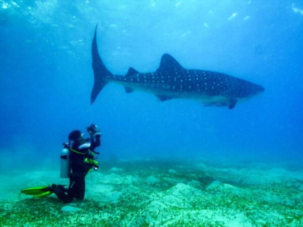 Las 9 Mejores Cámaras Sumergibles para Filmar Tiburones
