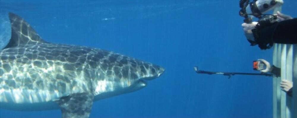 Filmando tiburones desde el interior de una jaula