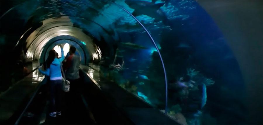 tiburones y niños SeaWorld