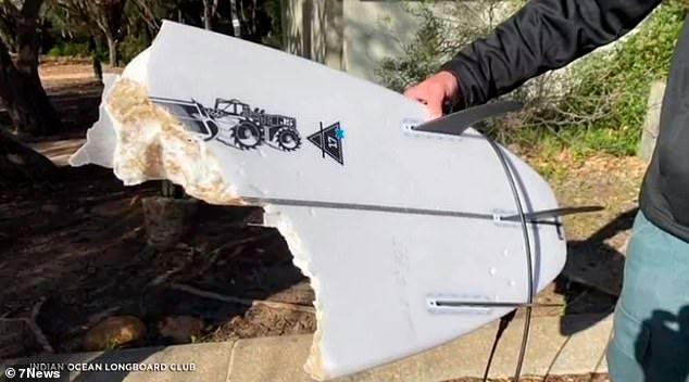 Phil Mummert tabla de surf partida por el ataque de un tiburon