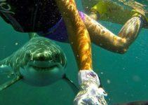 ataque de tiburon-tiburon persiguiendo buceador