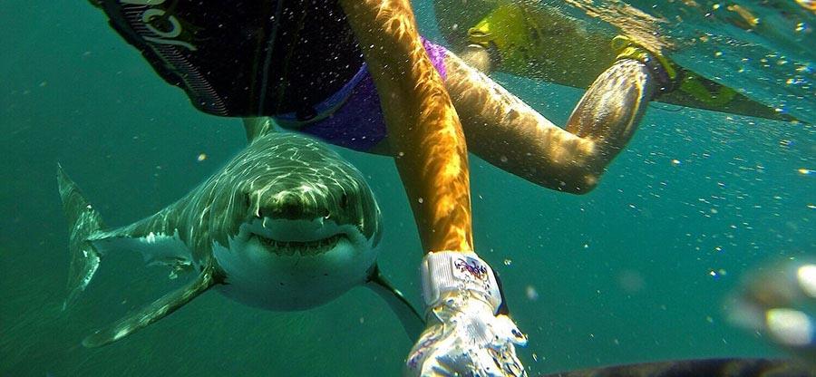Dos casos de 【superación humana】 después de ser atacados por tiburones