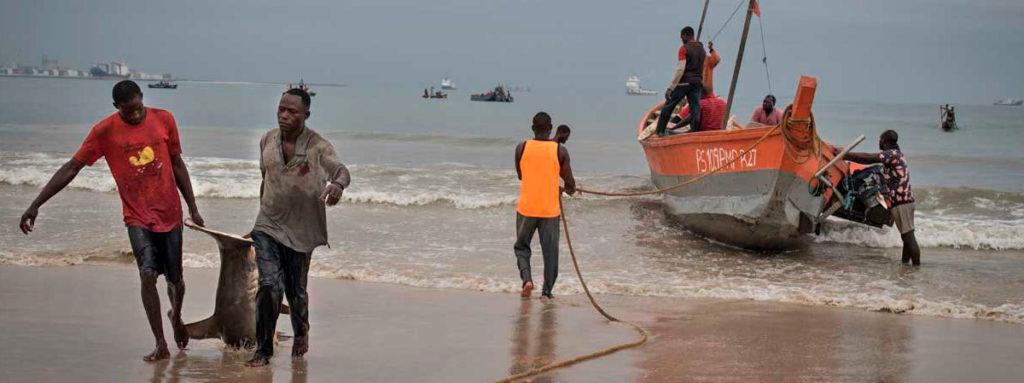 🎣 La sobrepesca en aguas del Congo pone en riesgo a los tiburones