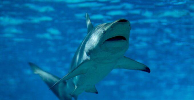 Tiburones.top