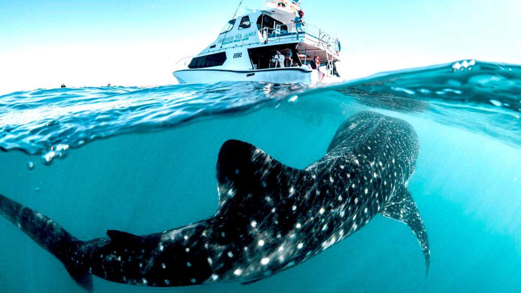 Cinco preguntas sobre los sacrificios de tiburones que están causando polémica en aguas de Nueva Caledonia